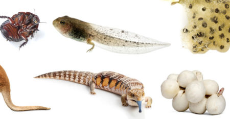 Life-Cycles-Reproduction